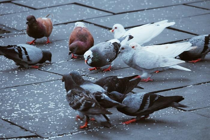nettoyants fientes pigeons
